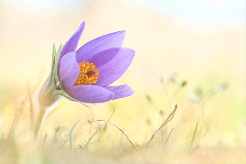 Fotogalerie: Biologische Vielfalt - Bild 9