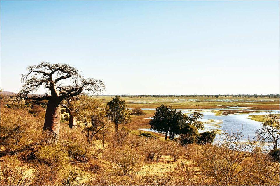 Fotogalerie: Namibia - Ein Schatz für Tiere