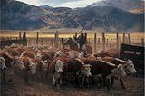 Viehabtrieb auf der Estancia Lago Belgrano