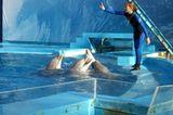 Tierschutz: Wale - bedrohte Giganten - Bild 2