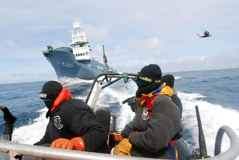 Tierschutz: Wale - bedrohte Giganten - Bild 5