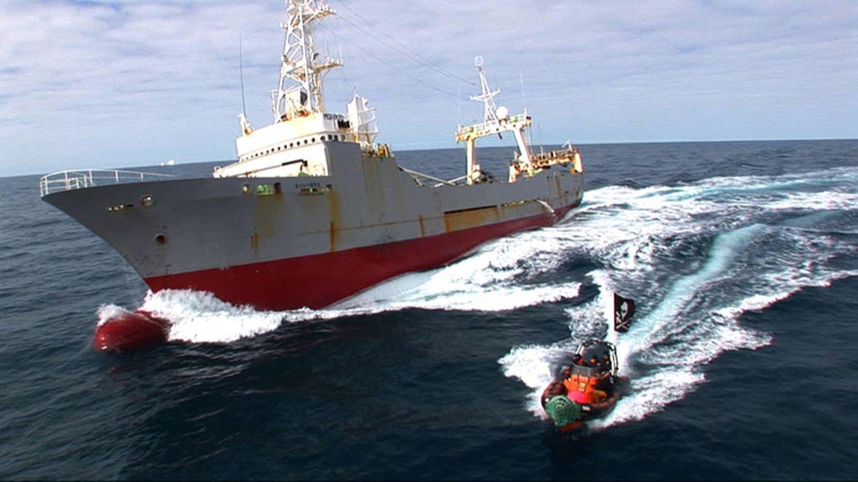 Tierschutz: Wale - bedrohte Giganten - Bild 6