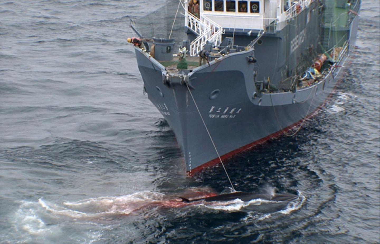 Tierschutz: Wale - bedrohte Giganten - Bild 7