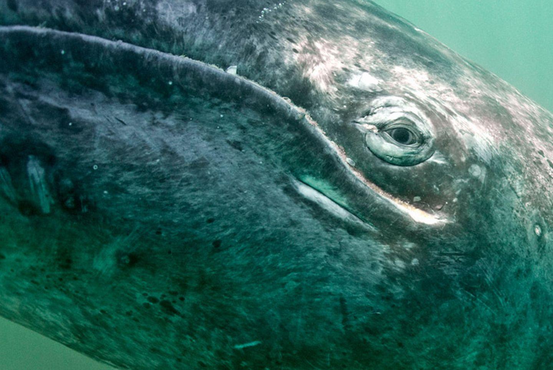 Tierschutz: Wale - bedrohte Giganten - Bild 9