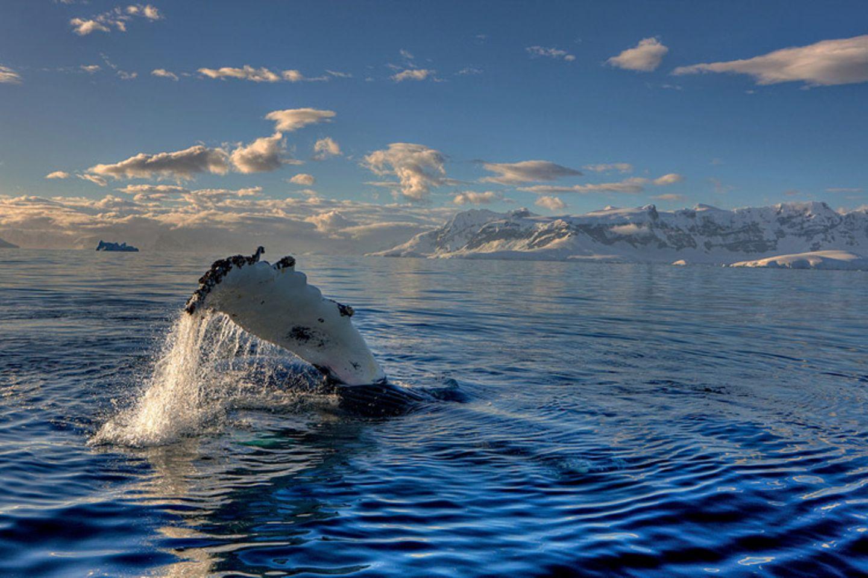 Tierschutz: Wale - bedrohte Giganten - Bild 10