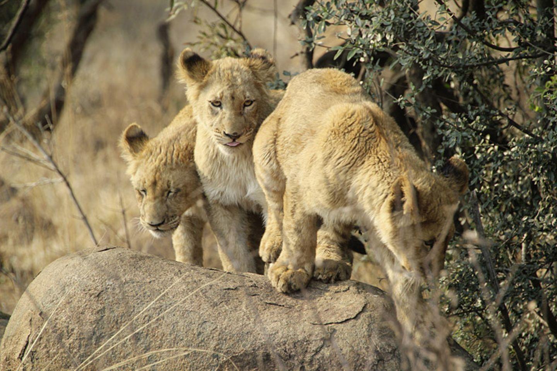 Kino: Kinotipp: African Safari 3D - Bild 4
