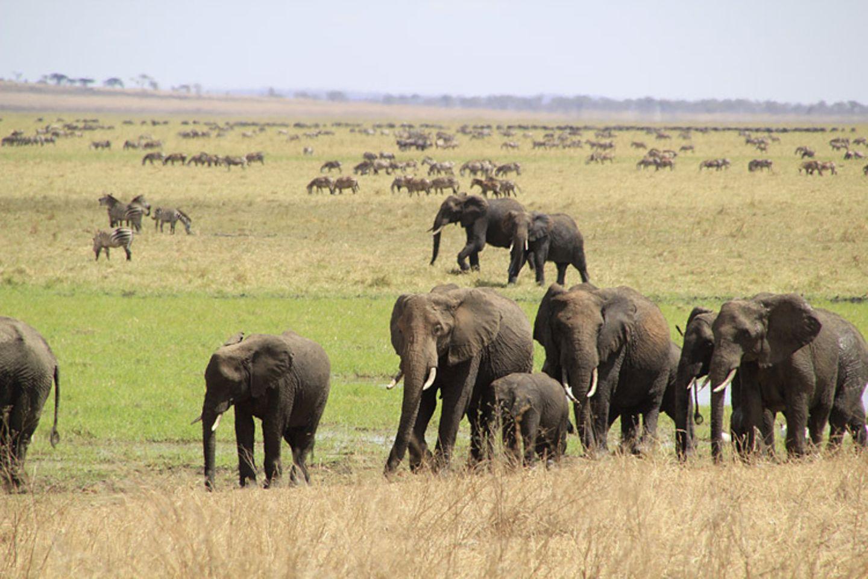 Kino: Kinotipp: African Safari 3D - Bild 6