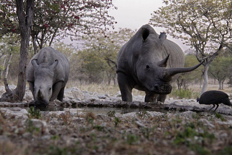 Kino: Kinotipp: African Safari 3D - Bild 7