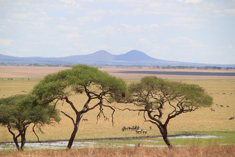 Kino: Kinotipp: African Safari 3D - Bild 11