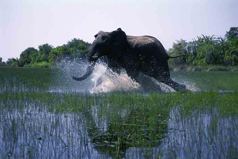 Kino: Kinotipp: African Safari 3D - Bild 13