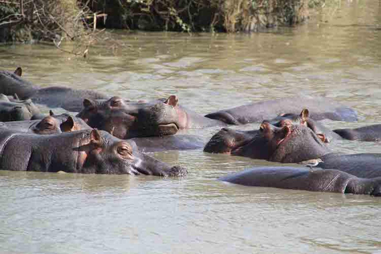 Kino: Kinotipp: African Safari 3D - Bild 15