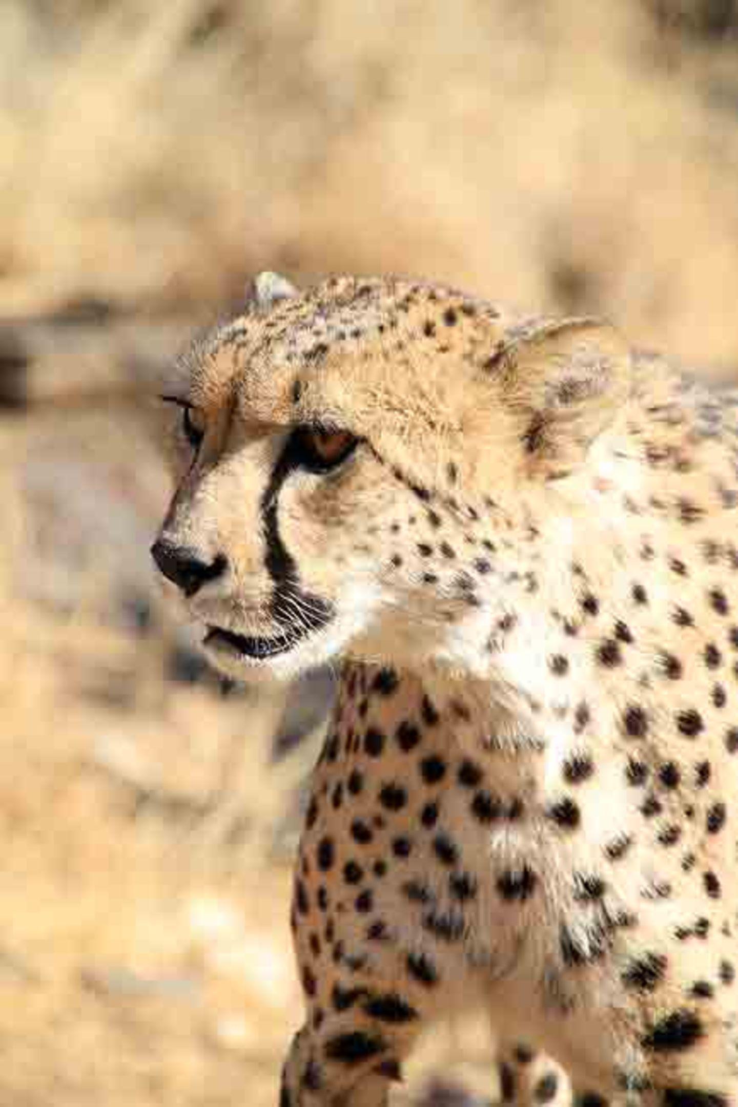 Kino: Kinotipp: African Safari 3D - Bild 16