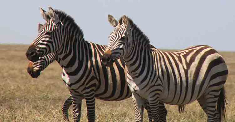 Kino: Kinotipp: African Safari 3D - Bild 21
