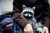 Tiere: Fotostrecke: In guten Händen - Bild 2