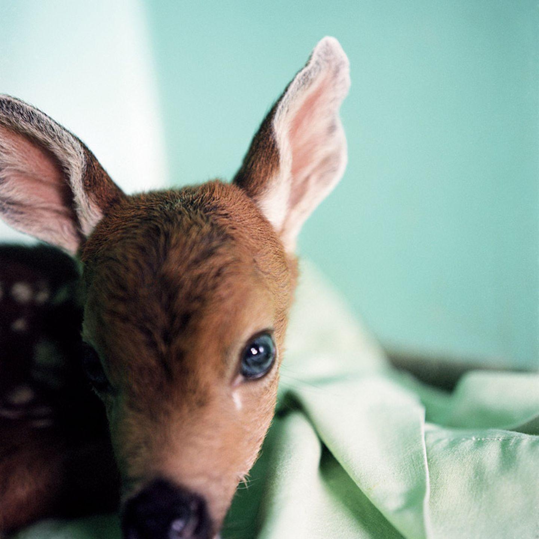 Tiere: Fotostrecke: In guten Händen - Bild 4