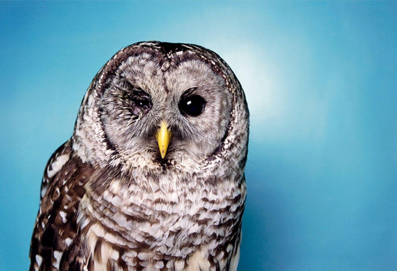 Tiere: Fotostrecke: In guten Händen - Bild 6