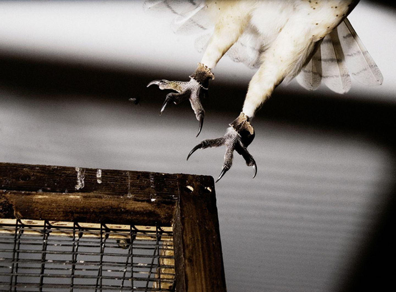 Tiere: Fotostrecke: In guten Händen - Bild 10