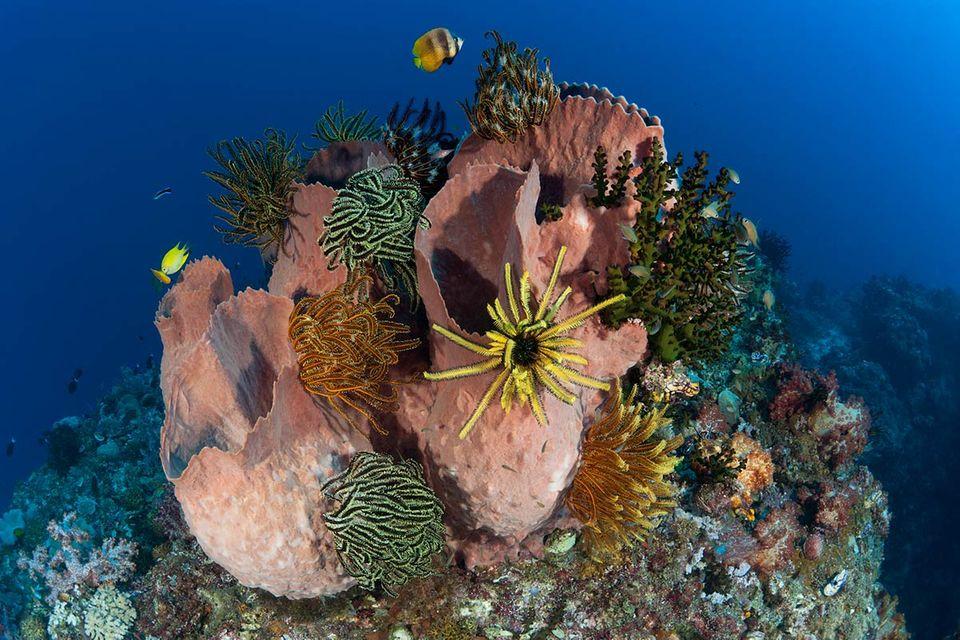 Fotogalerie: Im Herzen der Ozeane