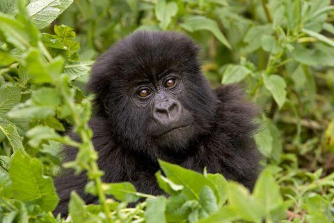 Fotogalerie: Affen in freier Wildbahn