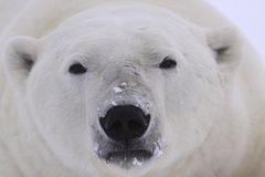 Tierschutz: Fotostrecke: Eisbären schützen - Bild 2
