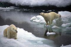 Tierschutz: Fotostrecke: Eisbären schützen - Bild 3