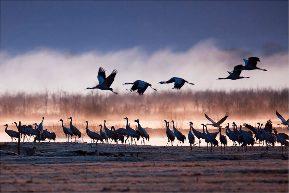 Fotogalerie: Vögel des Glücks