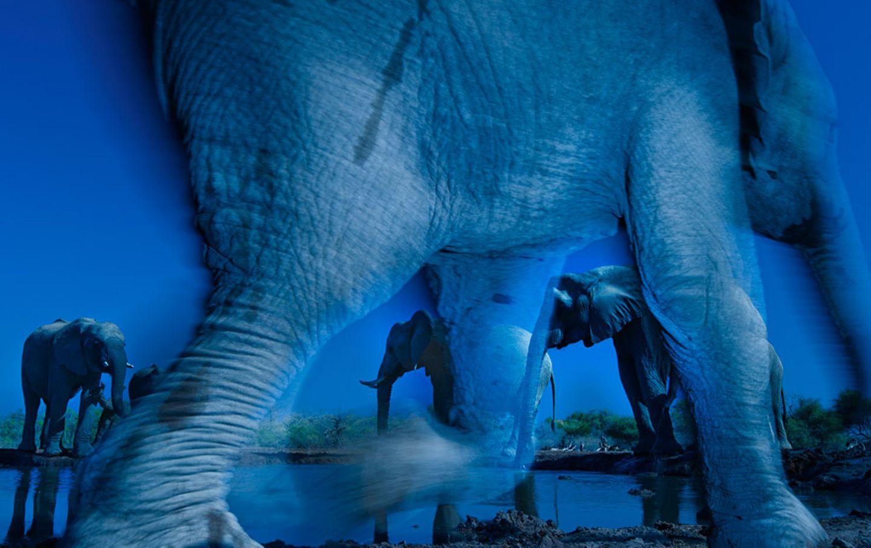 Das Wesen der Elefanten