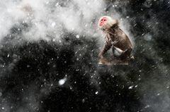 Schnee-Moment