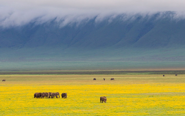 Tansania: Ngorongoro Krater