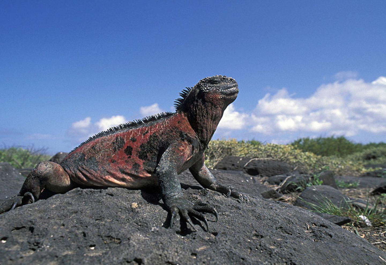 Ecuador: Galapagos Inseln