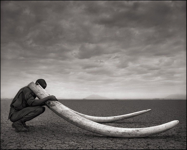 Elefanten-Stoßzähne