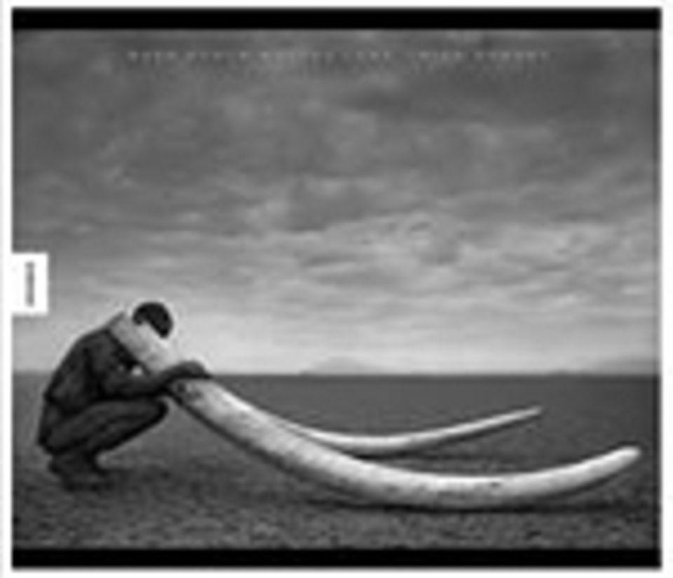 Fotogalerie Afrika: Nick Brandt Quer durch wüstes Land Knesebeck Verlag Gebunden, 120 Seiten 68 Euro