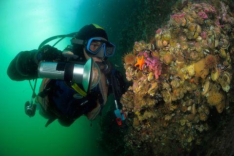 Fotogalerie: Unterwasser-Wunderwelt Patagonien