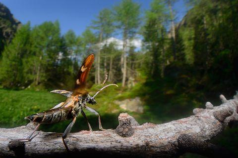 Fotogalerie: Bedrohte Schönheit: Der Nationalpark Hohe Tauern