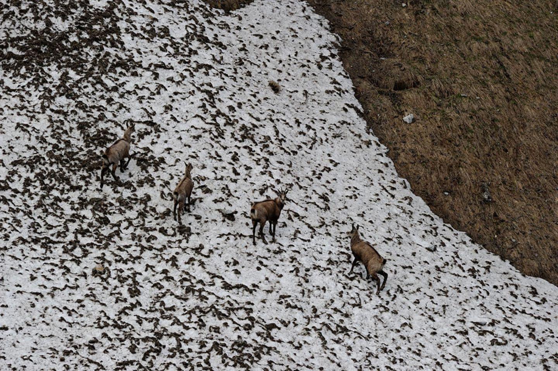 Fotogalerie: Bedrohte Schönheit: Der Nationalpark Hohe Tauern - Bild 12