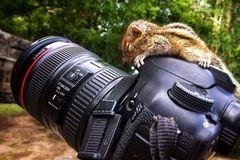 Fotostrecke: Palmenhörnchen Rob und Ziehvater Paul - Bild 2