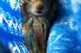 Fotostrecke: Palmenhörnchen Rob und Ziehvater Paul - Bild 4