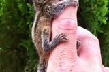 Fotostrecke: Palmenhörnchen Rob und Ziehvater Paul - Bild 5