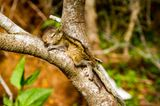 Fotostrecke: Palmenhörnchen Rob und Ziehvater Paul - Bild 8