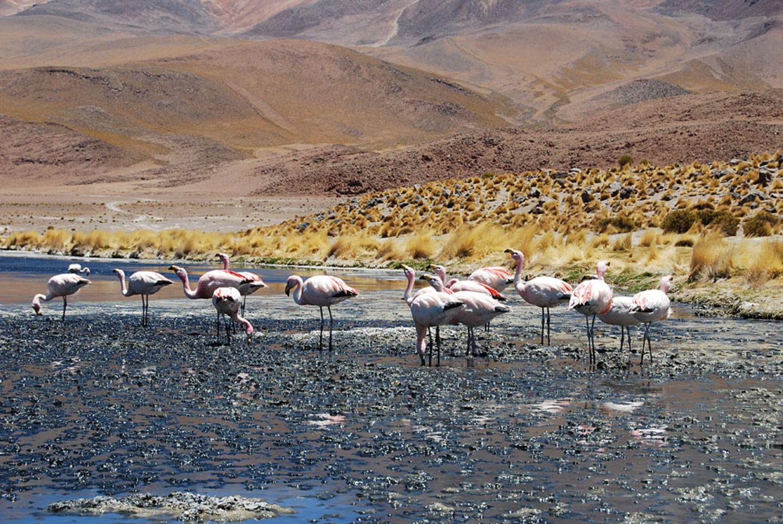 Heimat der Flamingos