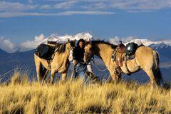 Ein Mann, zwei Pferde
