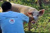 Fotostrecke: Tiere retten, Menschen helfen! - Bild 2
