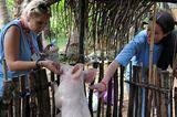 Fotostrecke: Tiere retten, Menschen helfen! - Bild 8