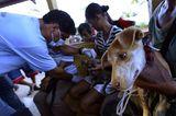 Fotostrecke: Tiere retten, Menschen helfen! - Bild 10