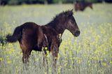 Fotostrecke: Freiheit für Wildpferde - Bild 2