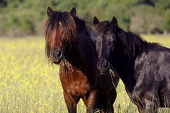 Fotostrecke: Freiheit für Wildpferde - Bild 3