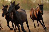 Fotostrecke: Freiheit für Wildpferde - Bild 4