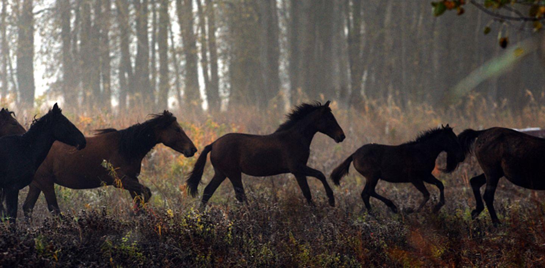Fotostrecke: Freiheit für Wildpferde - Bild 5