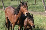 Fotostrecke: Freiheit für Wildpferde - Bild 6