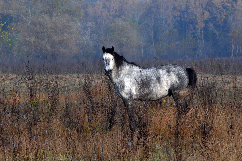 Fotostrecke: Freiheit für Wildpferde - Bild 8